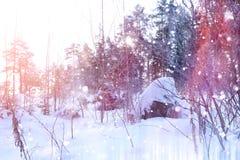 Floresta do inverno em um dia ensolarado Paisagem na floresta em um nevado Imagem de Stock