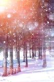 Floresta do inverno em um dia ensolarado Paisagem na floresta em um nevado Foto de Stock Royalty Free