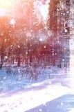 Floresta do inverno em um dia ensolarado Paisagem na floresta em um nevado Fotografia de Stock Royalty Free