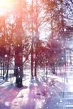 Floresta do inverno em um dia ensolarado Paisagem na floresta em um nevado Foto de Stock