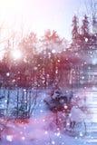 Floresta do inverno em um dia ensolarado Paisagem na floresta em um nevado Imagens de Stock Royalty Free