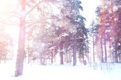 Floresta do inverno em um dia ensolarado Paisagem na floresta em um nevado Fotografia de Stock