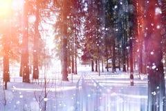 Floresta do inverno em um dia ensolarado Paisagem na floresta em um nevado Imagem de Stock Royalty Free