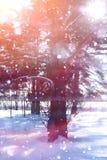 Floresta do inverno em um dia ensolarado Paisagem na floresta em um nevado Fotos de Stock