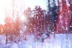 Floresta do inverno em um dia ensolarado Paisagem na floresta em um nevado Fotos de Stock Royalty Free