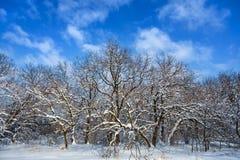 Floresta do inverno em uma neve em um fundo do céu azul Foto de Stock Royalty Free