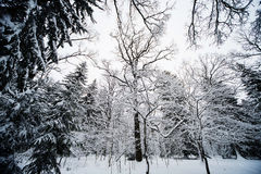 Floresta do inverno na neve imagem de stock
