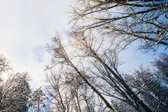 Floresta do inverno na neve fotos de stock
