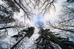 Floresta do inverno na neve fotografia de stock royalty free