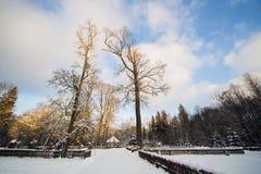 Floresta do inverno na neve foto de stock royalty free