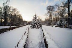 Floresta do inverno na neve fotografia de stock