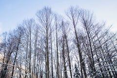 Floresta do inverno na neve imagens de stock royalty free