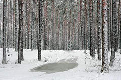 Floresta do inverno na neve Fotos de Stock Royalty Free