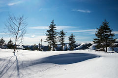Floresta do inverno nas montanhas Foto de Stock