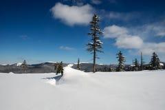 Floresta do inverno nas montanhas Imagem de Stock Royalty Free