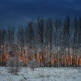 Floresta do inverno no alvorecer O sol levanta-se acima das nuvens do mar e do ouro Fotos de Stock