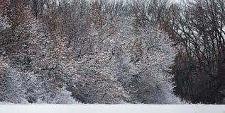 Floresta do inverno no alvorecer O sol levanta-se acima das nuvens do mar e do ouro Fotos de Stock Royalty Free