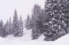 Floresta do inverno no blizzard Imagens de Stock Royalty Free