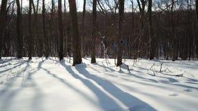 Floresta do inverno no movimento vídeos de arquivo
