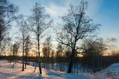 Floresta do inverno no por do sol Imagem de Stock