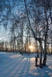 Floresta do inverno no por do sol Imagens de Stock Royalty Free
