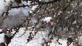 Floresta do inverno que contorce-se nos ramos do vento de uma árvore vídeos de arquivo