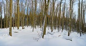 Floresta do inverno sem folhas Foto de Stock