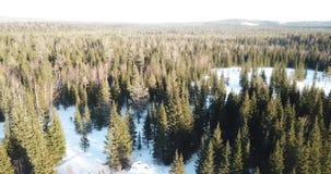 Floresta do inverno, taiga Siberian do zangão vídeos de arquivo