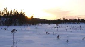 Floresta do inverno vista do zangão vídeos de arquivo