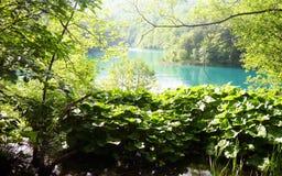 Floresta do lago Imagem de Stock Royalty Free