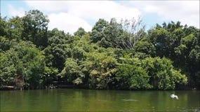 Floresta do lago que relaxa com natureza video estoque