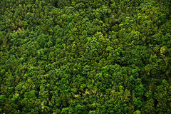 Floresta do louro nas Ilhas Canárias Fotografia de Stock