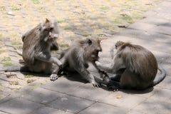 Três macacos na floresta do macaco de Ubud, Bali, Indonésia Imagens de Stock Royalty Free