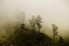 Floresta do mistério Fotografia de Stock Royalty Free