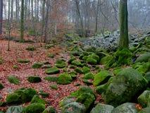 Floresta do mistério Foto de Stock Royalty Free