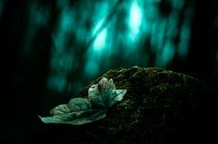 Floresta do mistério Imagem de Stock Royalty Free