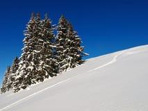 Floresta do monte e do abeto coberta pela neve Fundo do inverno Imagem de Stock Royalty Free