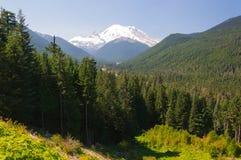 Floresta do Monte Rainier e do cedro foto de stock