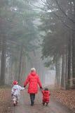 Floresta do Natal imagens de stock royalty free