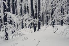 Floresta do Natal do inverno com neve em ramos Fotos de Stock