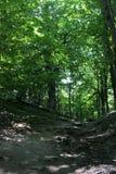 Floresta do ninho dos abibes fotos de stock royalty free