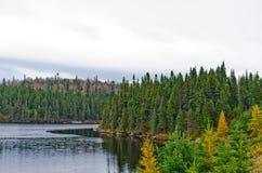 Floresta do norte de Ontário Fotografia de Stock Royalty Free