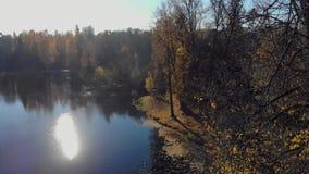 Floresta do norte perto do lago em um dia ensolarado, paisagem brilhante do outono video estoque
