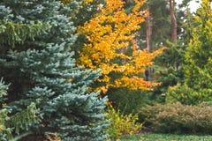 Floresta do outono, árvores e licença bonitas, paisagem imagem de stock