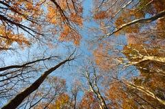 Floresta do outono imagem de stock royalty free