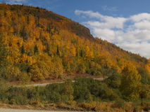 Floresta do outono Fotos de Stock Royalty Free