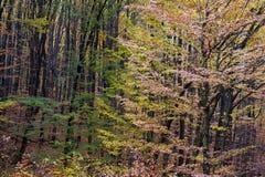 Floresta do outono Imagens de Stock Royalty Free