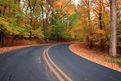 Floresta do outono Imagens de Stock