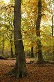 Floresta do outono imagem de stock