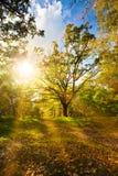 Floresta do outono fotos de stock